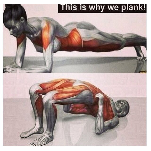 This is why we plank this is why we plank exercise for Plank muscles worked diagram