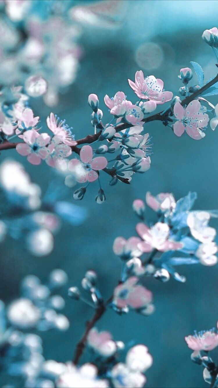 Spring Flower Wallpaper Spring Flowers Wallpaper Flower Background Wallpaper Blue Flower Wallpaper