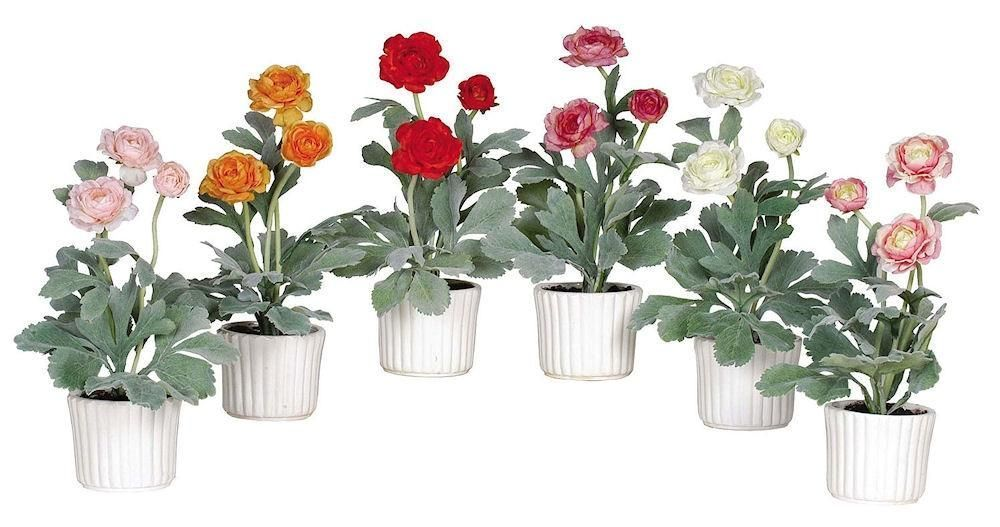 Ranunculus Set of 6 Silk Plants with Ceramic Pots | 12 inches
