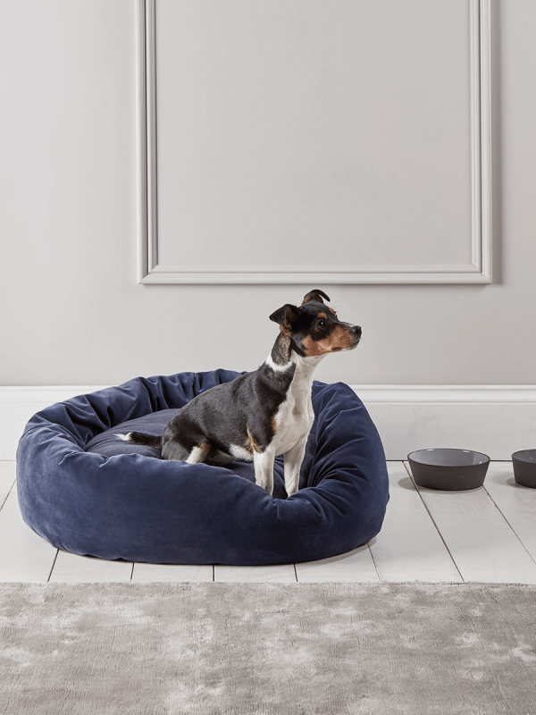 Velvet Dog Bed in 2020 Velvet dog, Velvet dog bed, Dog bed