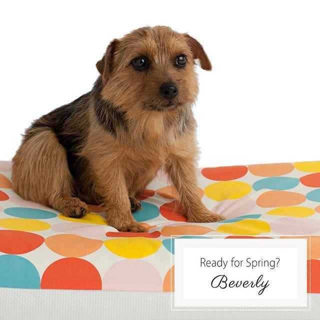 なんか偉そうなメンちゃんです Anberso Blog 犬 大型犬 小型犬