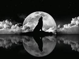 Black And White Wolf Wallpaper Wolf Photos Wolf Howling