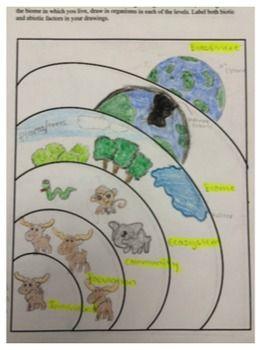 levels of ecological organization worksheet ecology pinterest worksheets organizations. Black Bedroom Furniture Sets. Home Design Ideas