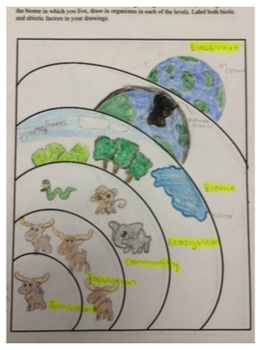 Levels of Ecological Organization Worksheet | Science