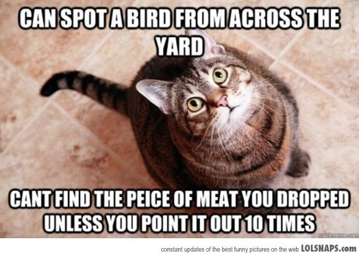 My Cat Can Be So Stupid Lolsnaps Stupid Cat Funny Cats Funny