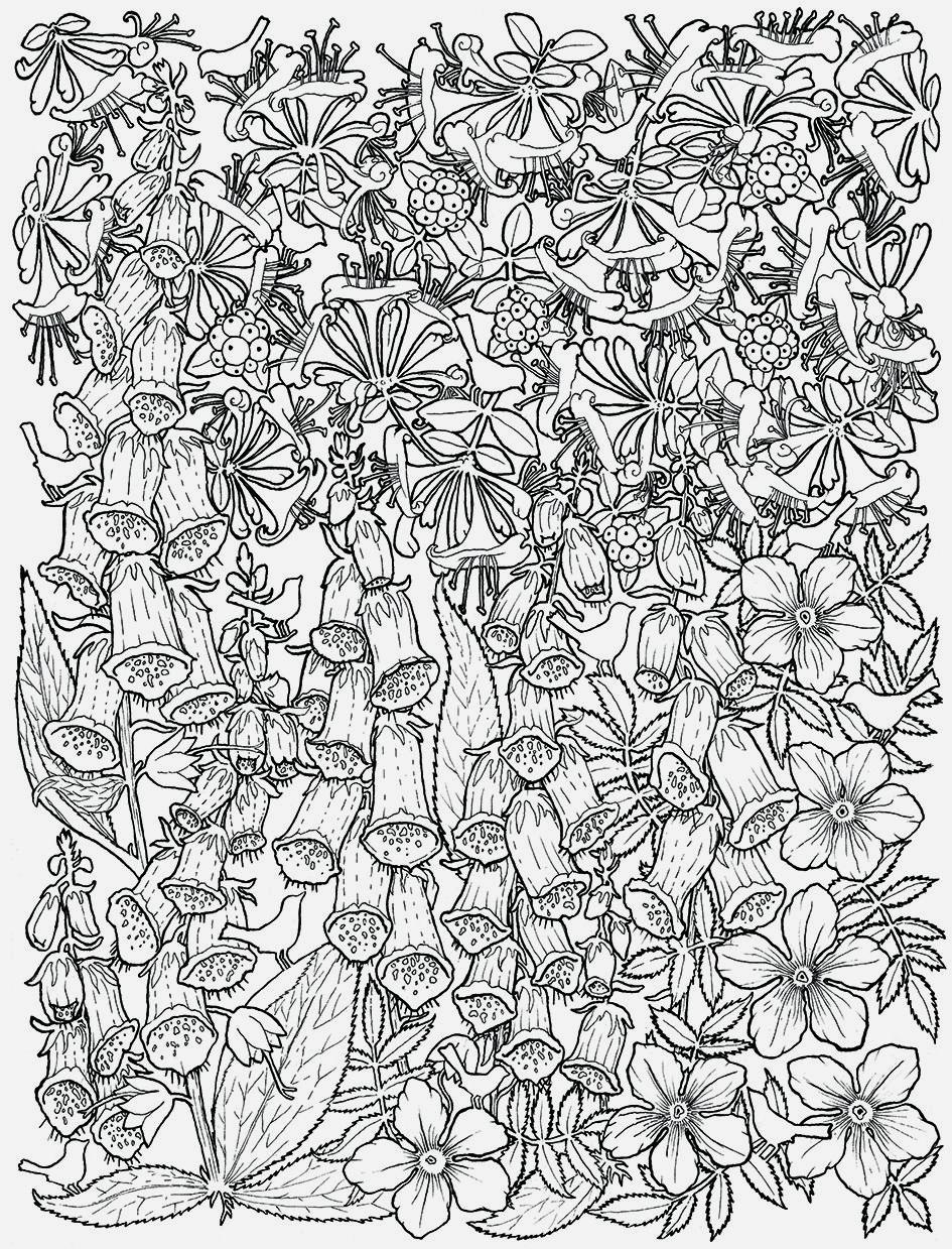 Kleurplaten Voor Volwassenen Met Bloemen.Afbeeldingsresultaat Voor Kleurplaten Voor Volwassenen Bloemen