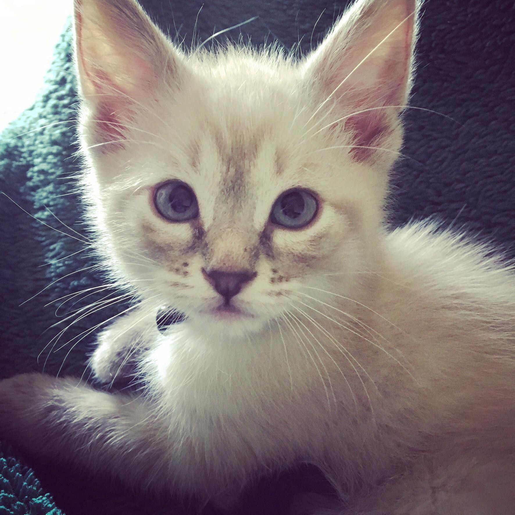 My sweet baby Kit as a kittenhttps//i.redd.it