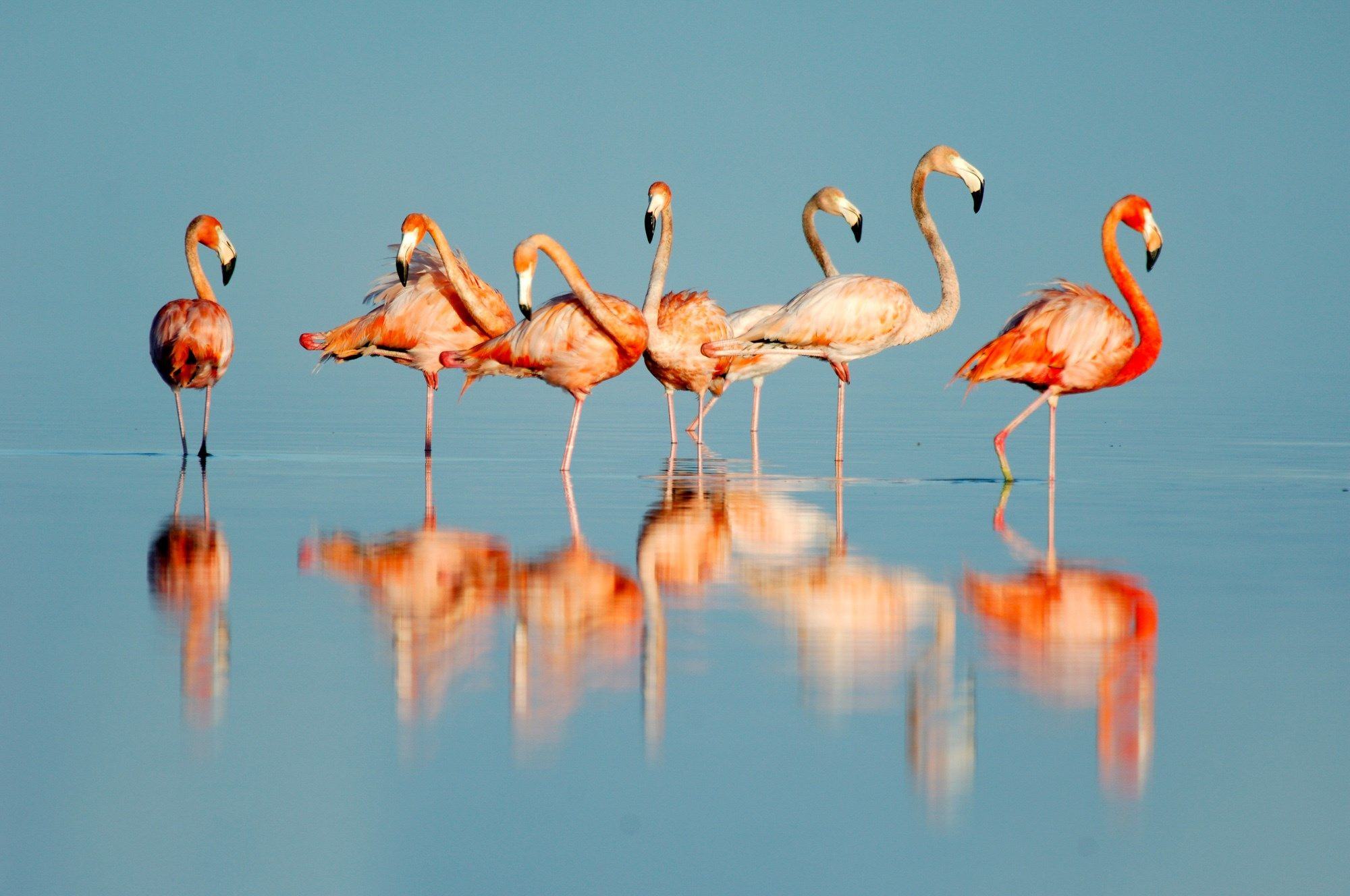 flamingo hd widescreen wallpapers backgrounds