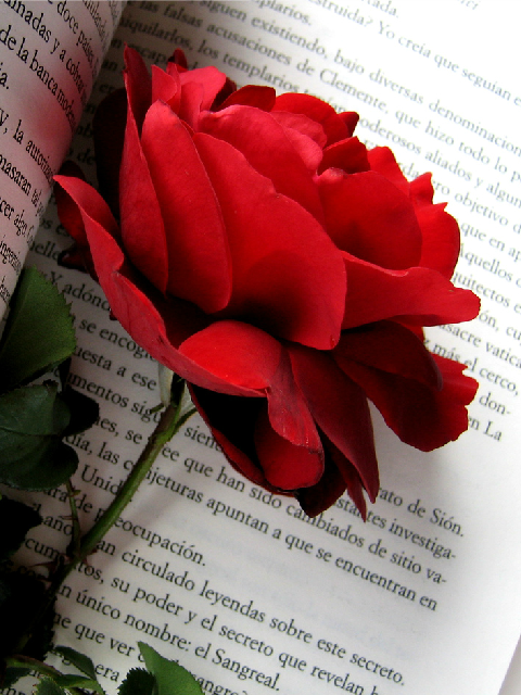 red tumblr buscar con google flors pinterest red roses rose