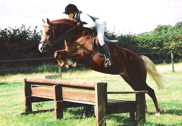 Profile - Rainhill Rosemary : Rainhill Welsh Cobs
