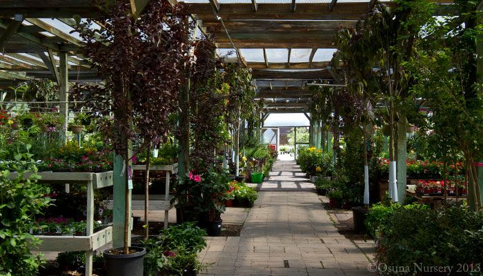Osuna Nursery Garden Center In Albuquerque, New Mexico