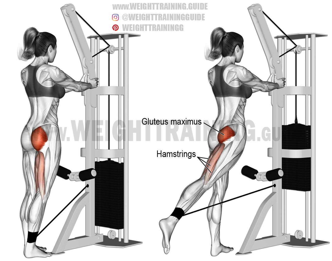 Standing cable hip extension exercise instructions and video ...