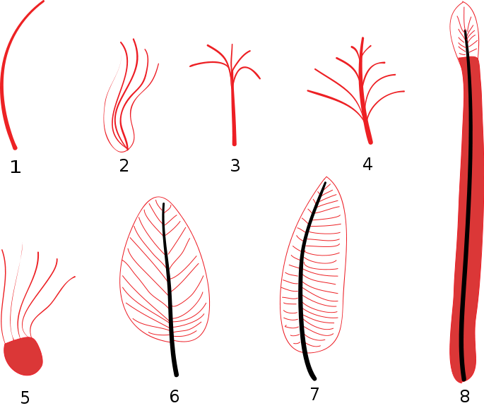 Feather Stages Diagram Feather Diagram Illustrating Stages Of
