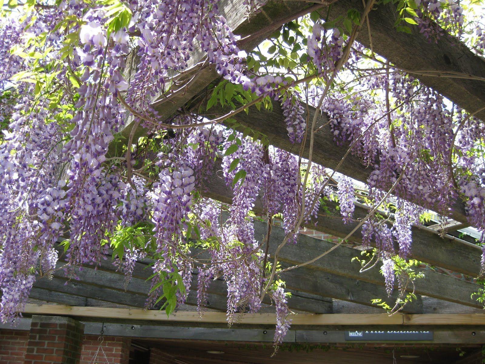 Chicago Botanic Garden Pergola Like Structure With 640 x 480