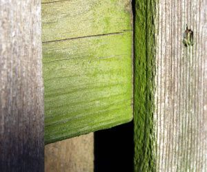 How To Remove Mold And Mildew From Wood :) This Will Come In Handy.