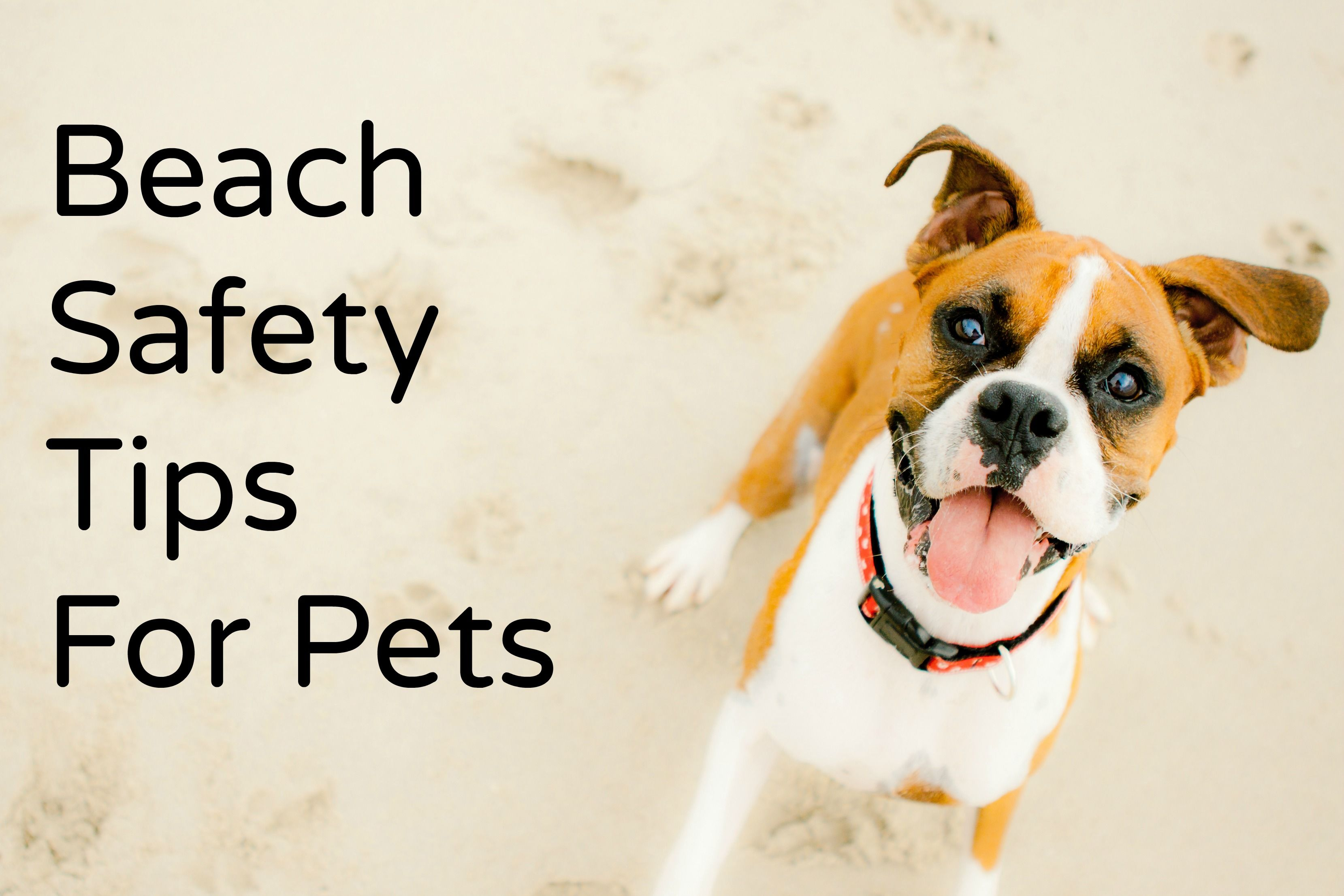 Summer Is Here 5 Beach Safety Tips For Pets Visit Http Www Steinhausers Com All Your Pet Food And Dog Friendly Beach Pet Care Dogs Dog Sunscreen