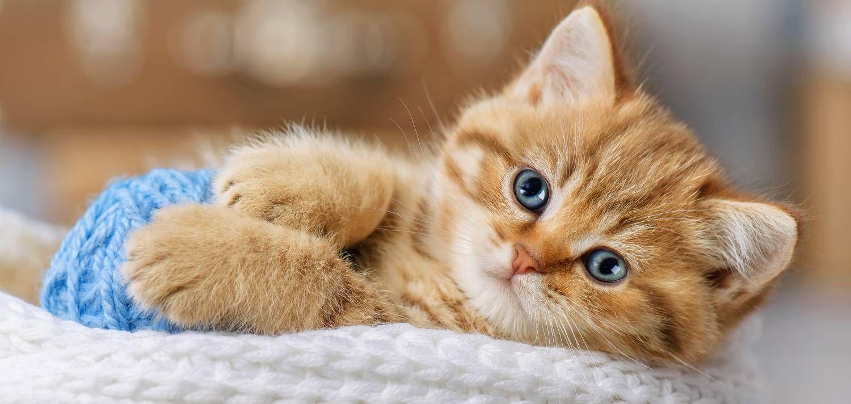 Stop Kitten Biting In 2020 Animals Kitten Biting Kittens