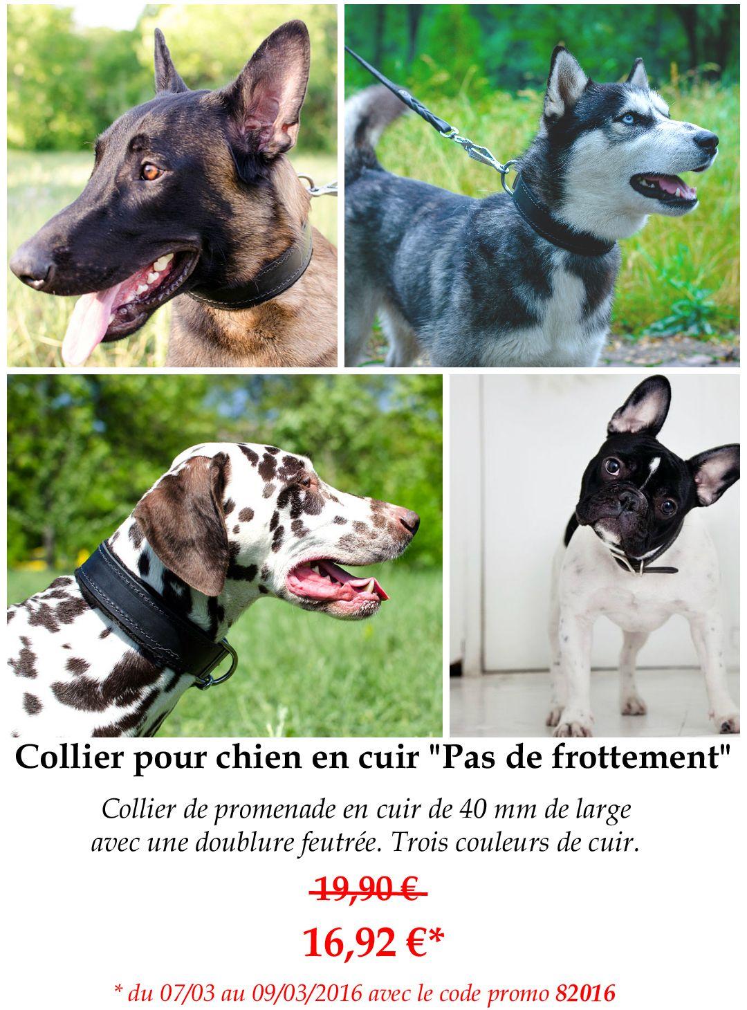 collier pour chien promo
