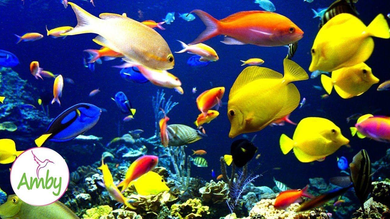 Stunning Aquarium The Best Relaxing Music Sleep Music Hd 1080p In 2020 Fish Wallpaper Fish Background Tropical Fish