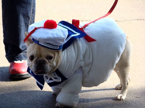 stay puft french bulldog by istolethetv