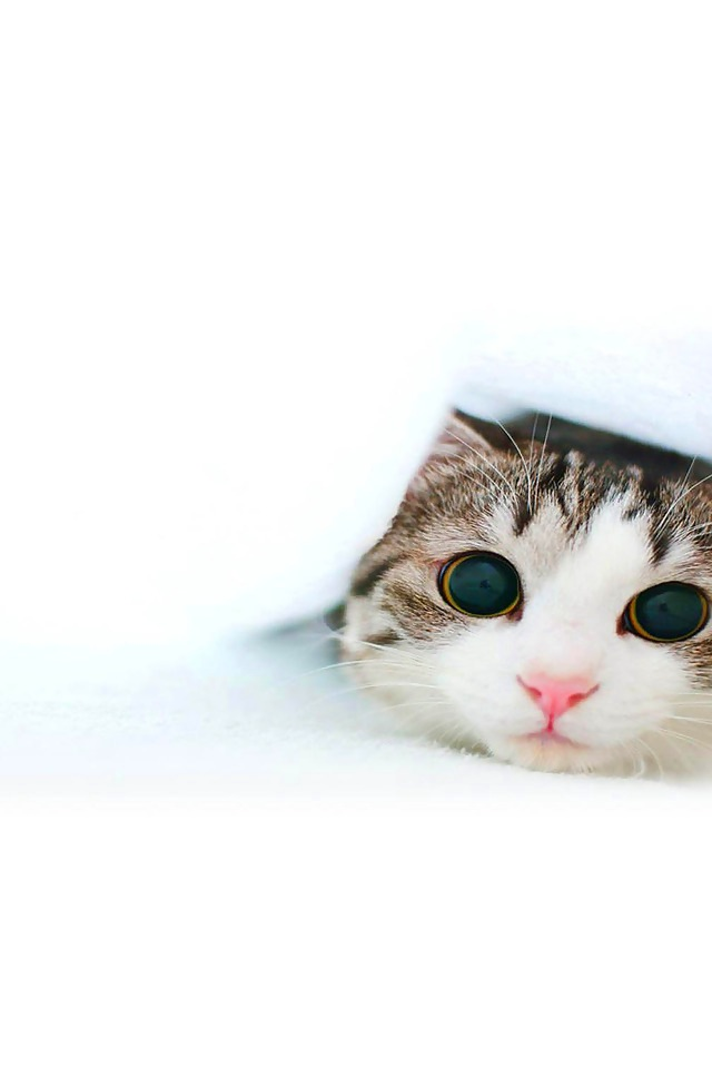 "cutecatsaww: ""Follow For Cute Cats Everyday """