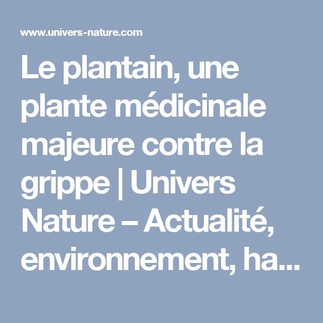 Le plantain une plante m dicinale majeure contre la grippe univers nature actualit - Plante contre l humidite dans la maison ...