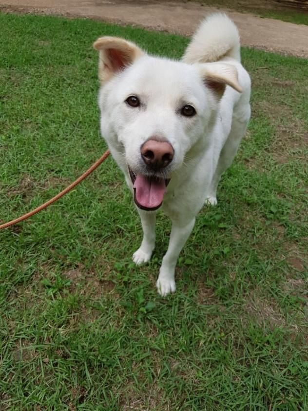 Adopt Getty on Dogs, Adoption, Animals