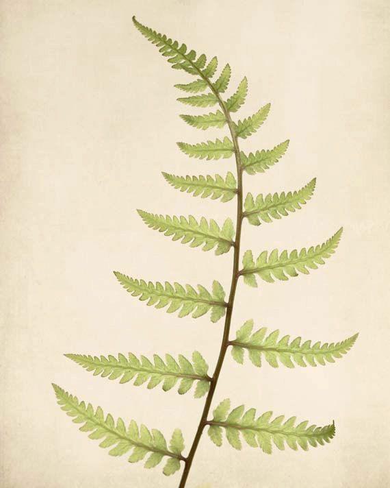 Botanical Print, Fern Art, Kitchen Wall Art, Living Room Wall Decor ...