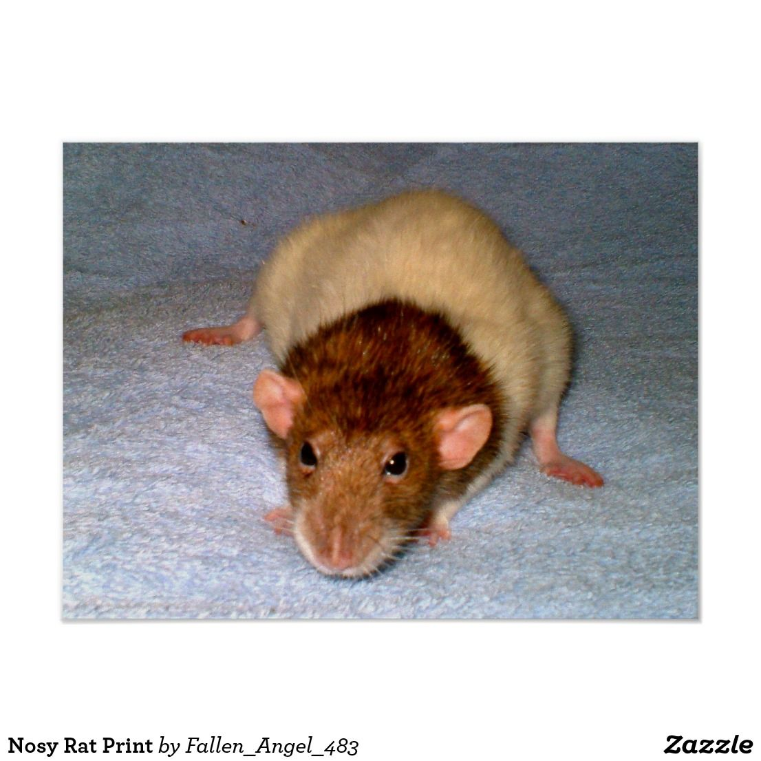 Nosy Rat Print (With images) Pet rats