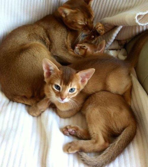 Immagine di cats