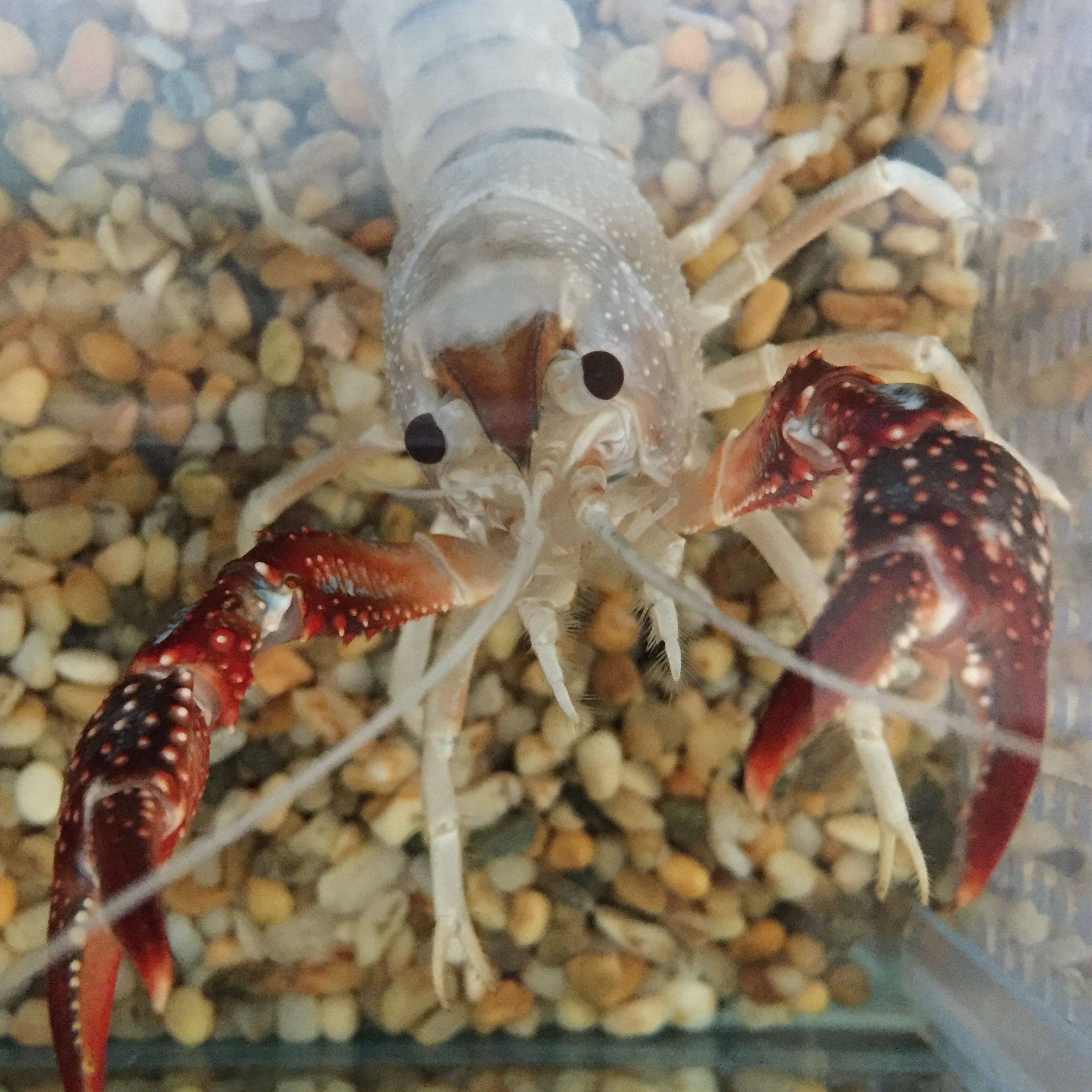 Pin by Andromeda on Crustaceans