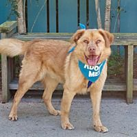 Available pets at Peace of Mind Dog Rescue in Pacific