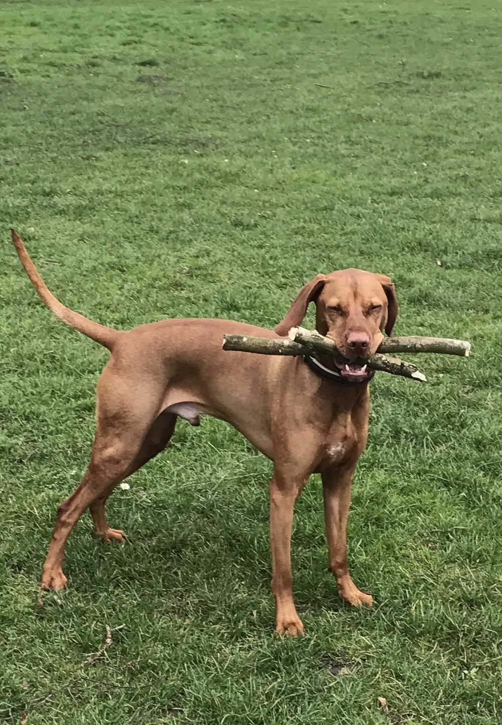 Boomer has two sticks because y'know one is not enough http://ift.tt/2mA21DJ