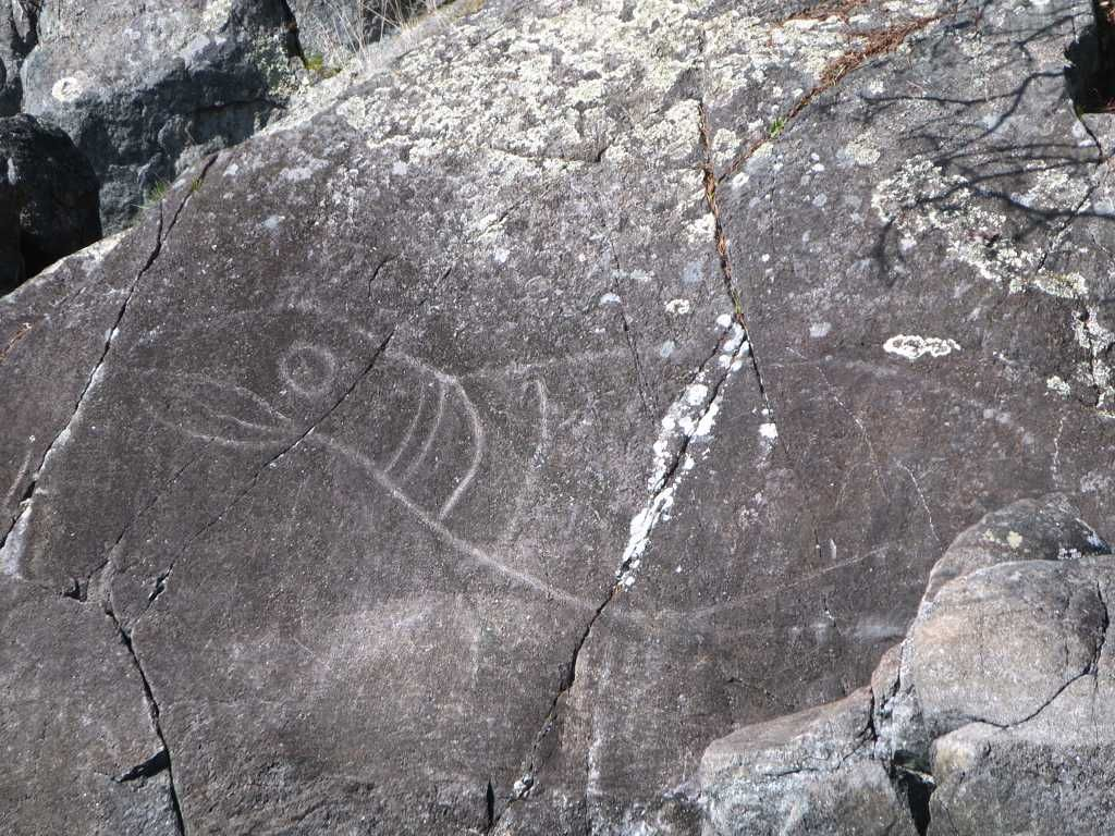 Hundreds of years ago a native artist.carved this petroglyph of a seal on a coastal rock in East Sooke Regional Park west of Victoria, British Columbia.
