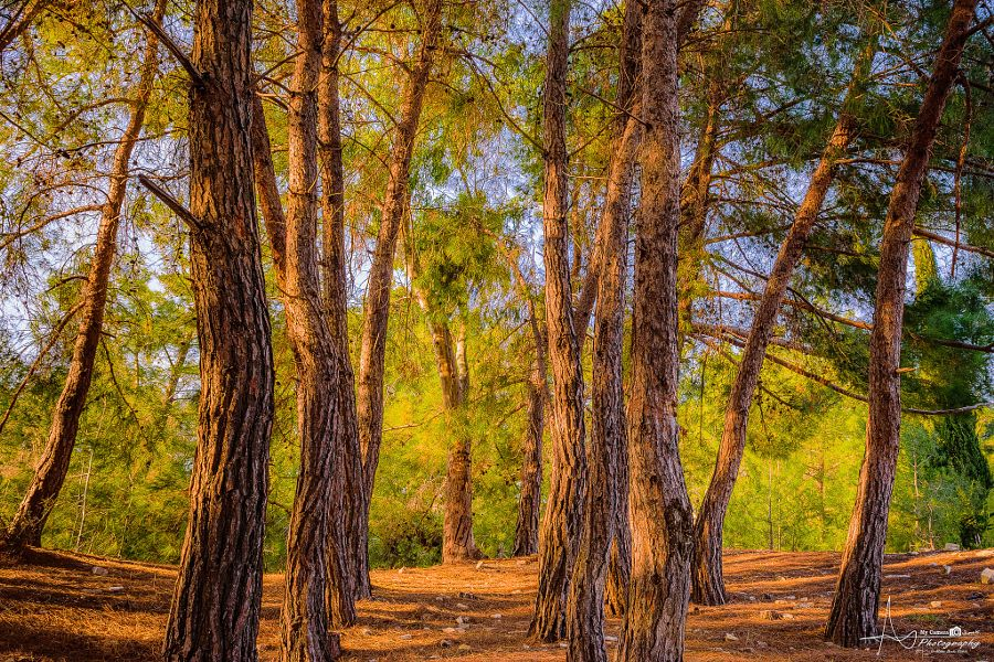 Forest | Forest, Landscape, Photo