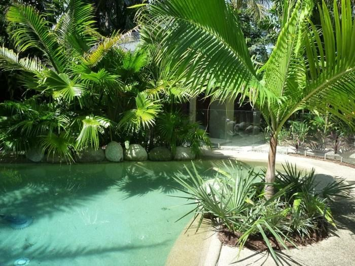 Amenagement Jardin Palmiers Piscine Esprit Tropical Amenagement
