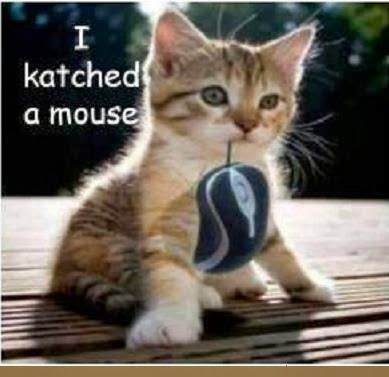 cute cat quotes sayings