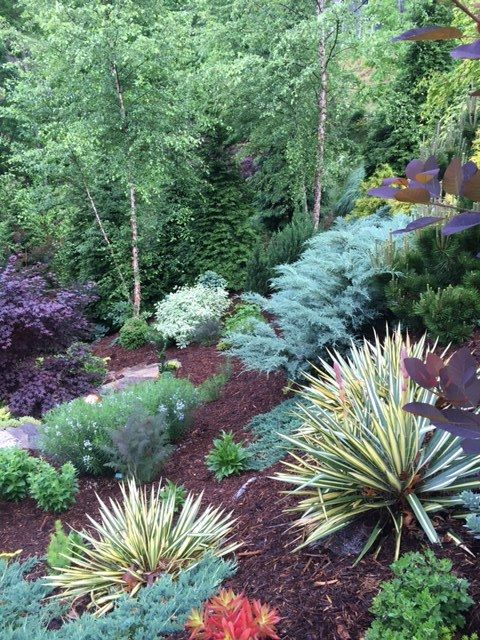 A Slideshow Of Plant Combinations B B Barns Garden Center Landscape Services Sloped Backyard Landscaping Front Yard Garden Design Plants