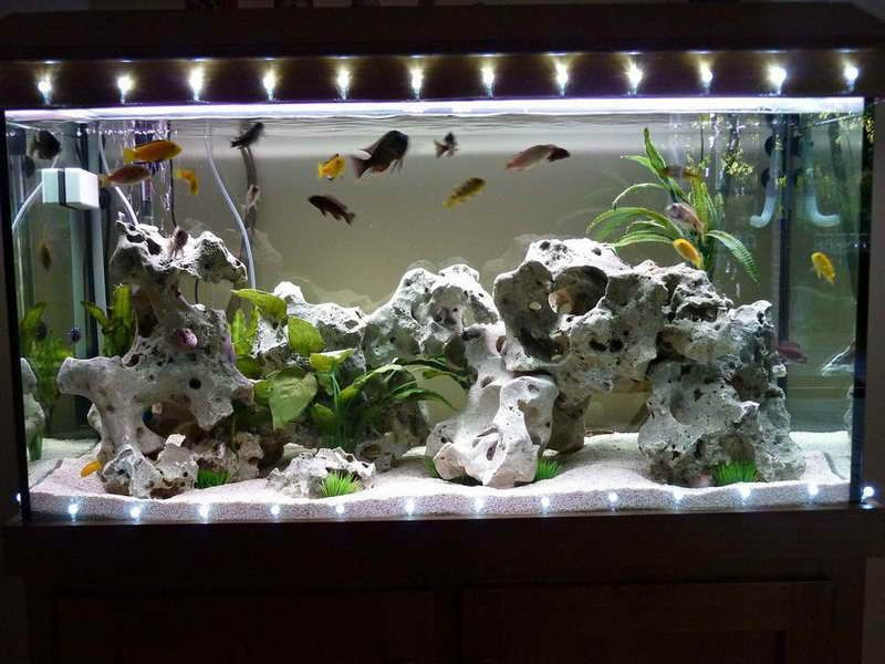 Good aquarium decorations for Tall fish tank decorations