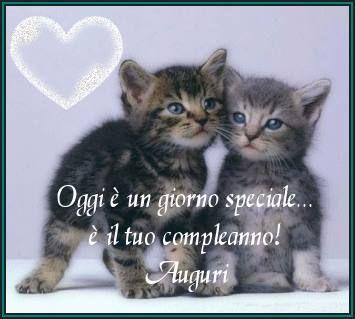 Oggi è giorno speciale, è il tuo compleanno! Auguri! | Gatti