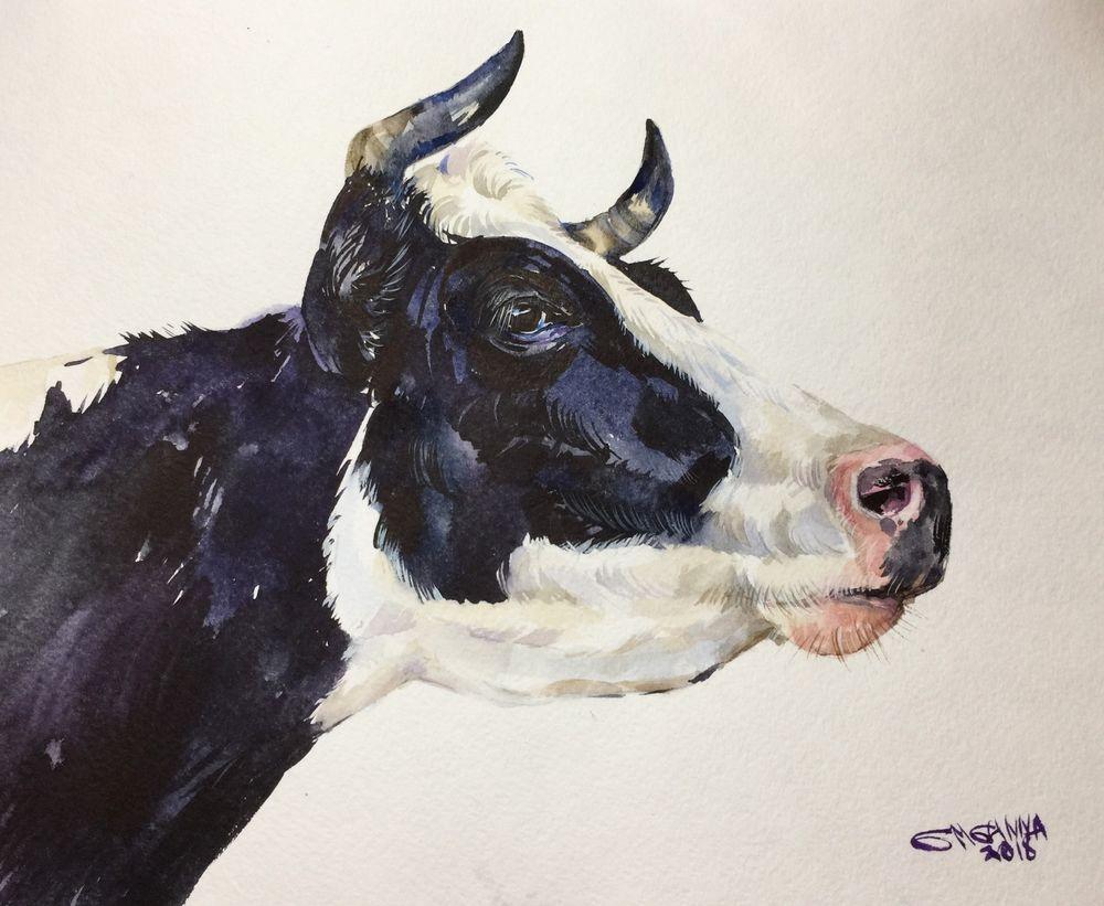 White Black Cow Portrait Farm Animal Farm Art Original