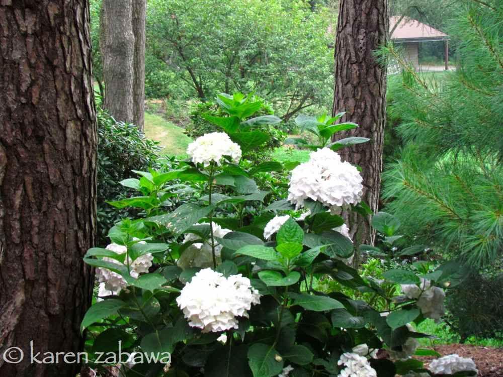 Hydrangea And Rhododendron Companion Plants In Woodland Area Landscape Decor Diy Plants Hydrangea Bloom