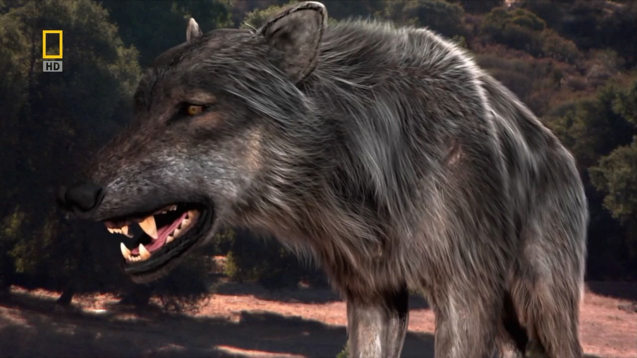 Image result for prehistoric dire wolves