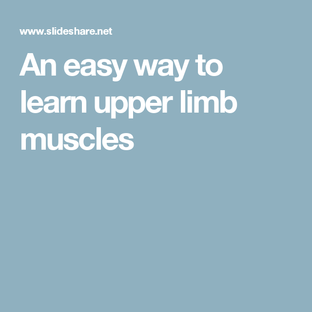 An Easy Way To Learn Upper Limb Muscles Anatomy Upper Limb