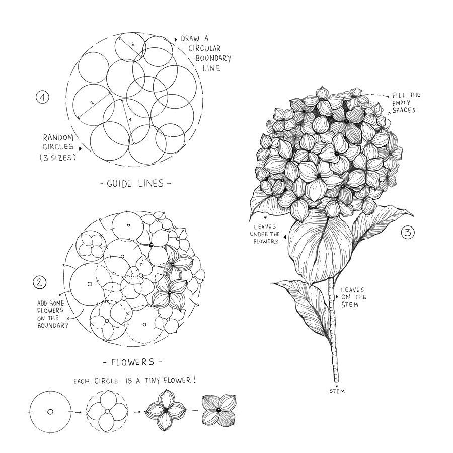 Alice On Instagram Hydrangea I Love Hydrangeas Maybe You Know That And Here Is How You Can Flower Drawing Tutorials Flower Drawing Floral Drawing