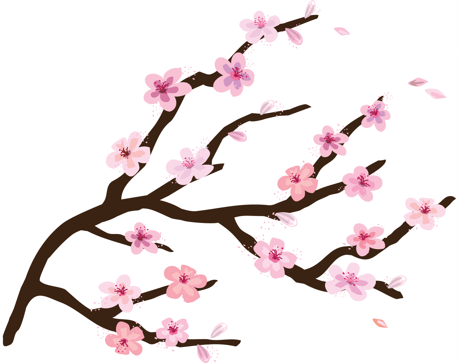 Cherry Blossoms Png 1500 1190