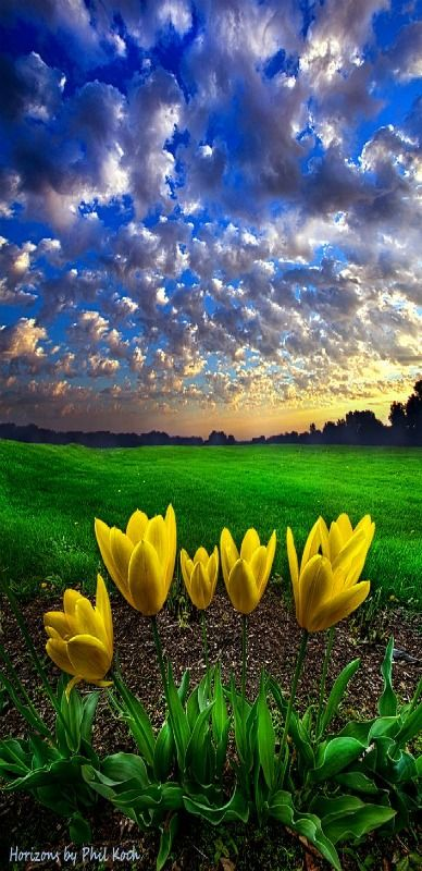 Spring | Horizons, Milwaukee, Wisconsin, USA | by Phil Koch