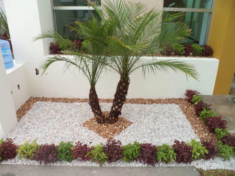 Jard nera con palma robelina y amarantos verde y rojo - Jardineras para jardin ...