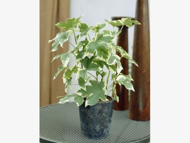 11 Zimmerpflanzen für dunkle Ecken | Zimmerpflanzen, Dunkel und ...