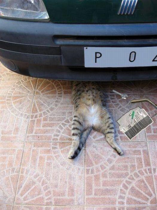 Para Arreglar El Coche Usa El Gato Cat Fixing Car Gatos Meme Gato Animales Bonitos